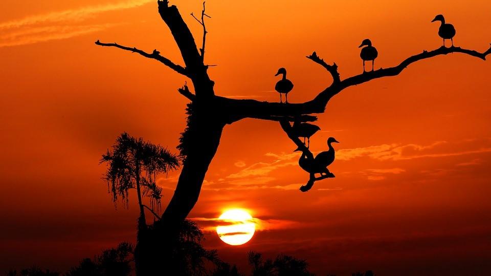 Elk vogeltje zingt zoals het is gebekt