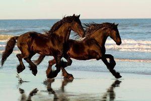 paarden fluisteraar
