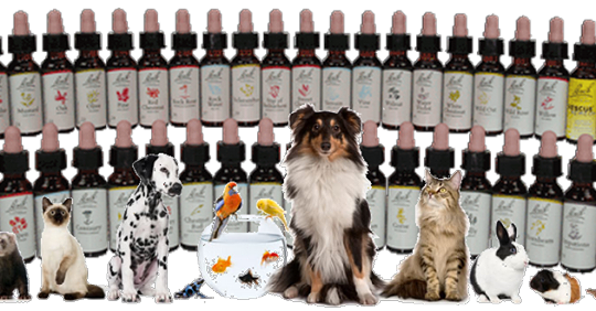 Alternatieve geneeswijzen voor dieren
